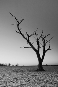 Old Tree, New Forest (asp100-3078)