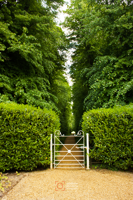 Lime Walk, Kingston Lacy (asp100-0193)